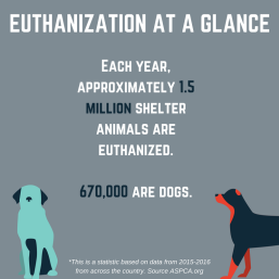 Euthanization data vis